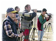 Grupu d'Ornitoloxía Mavea