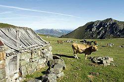 Cabaña y ganado