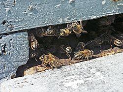 """Las colmenas están en lugares alejados de poblaciones grandes para que no haya polución y las alimentamos con su propia miel para que el proceso sea lo más natural posible"""". Fé González, productora de miel."""