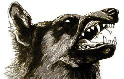 Refranes sobre el lobo en la tradición astur