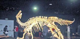 Esqueleto completo de Camptosaurus en el Museo del Jurásico de Asturias (Colunga)