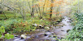 Río Tablizas en Muniellos