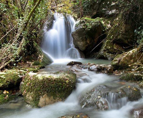 Bosque de Beyu Pen en Amieva.