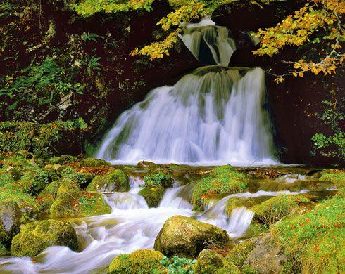 Campa L'Escobio. Parque Natural de Redes