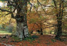 Bosque en el Parque Natural de Redes