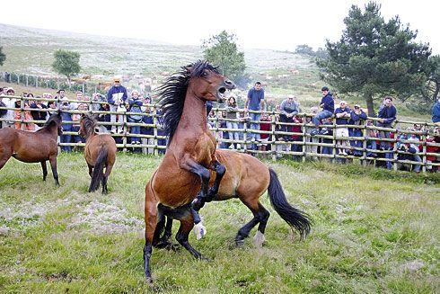 La Rapa das Bestas tiene lugar el primer domingo de julio y es Fiesta de Interés Turístico