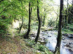 Bosque a las orillas del río Agüeira