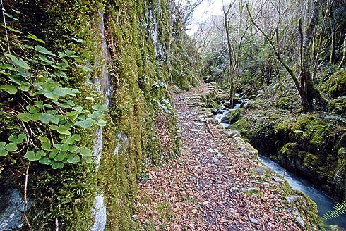 Ruta del Bosque Beyu Pen en Amieva