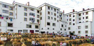 Feria de ganado en las Fiestas de Nuestra Señora del Rosario, Riosa.