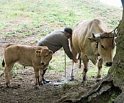 Belmonte, tierra de ganaderos
