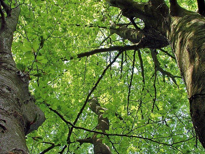 Avances en Biomasa