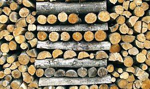 Troncos. Biomasa