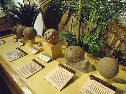 Exposición de Huevos de Saurópodos en el MUJA (Colunga)