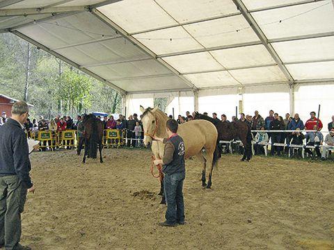 Concurso-Exposición del Caballo en Belmonte de Miranda