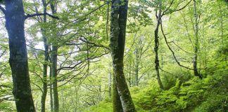 Asturias, región forestal