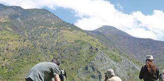 Avistamiento de oso pardo en el Parque Natural de Fuentes del Narcea