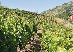 Paseo del Vino en Cangas del Narcea