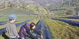 La promotora Lorena Sariego supervisa su plantación de arándanos en Fresneo
