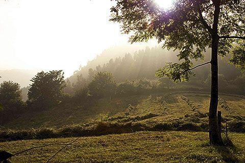 Bosque en Cabranes