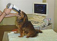 Mascotas revisión ocular