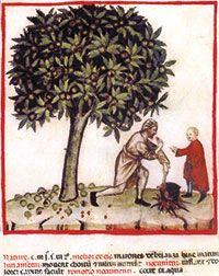 mitologia-castano