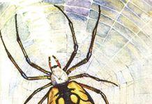 Cuentos y leyendas sobre las arañas