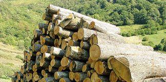 El aprovechamiento forestal será muy importante en el nuevo LEADER