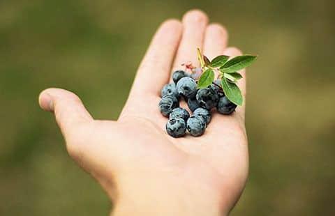 Alimentos del Paraíso Naturas. Arándanos