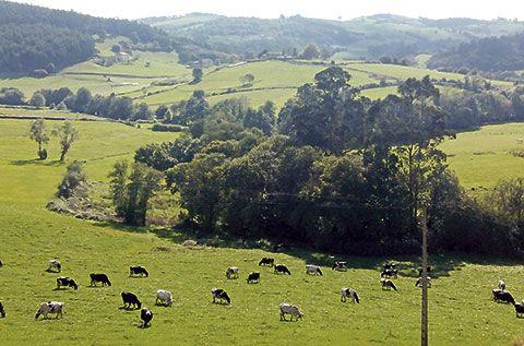 Vacas de producción ecológica