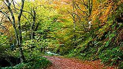 Bosque en Muniellos (Cangas del Narcea)