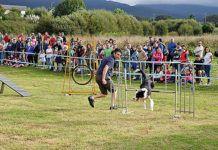 Exhibición de adiestramiento canino en El Franco / Foto: Fusión Asturias