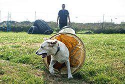Entrenamiento de la Unidad Canina de Rescate