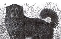 Perros fantasmales en la tradición asturiana