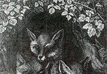 Mitos sobre La Raposa