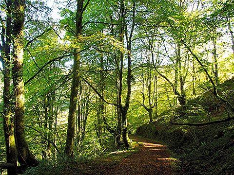 Ruta del Bosque de Cea (Parres)