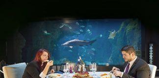 Cenas en el Acuario de Gijón