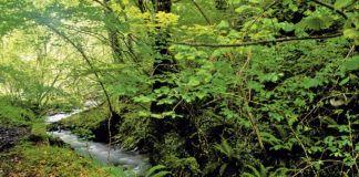 Río Mampodre