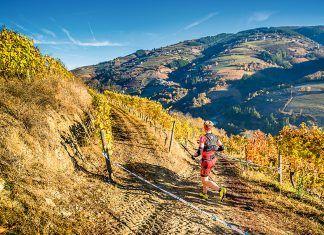 Atleta entre viñedos en el Trail Tierras Pésicas (Cangas del Narcea)