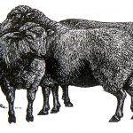 De llobos y oveyes
