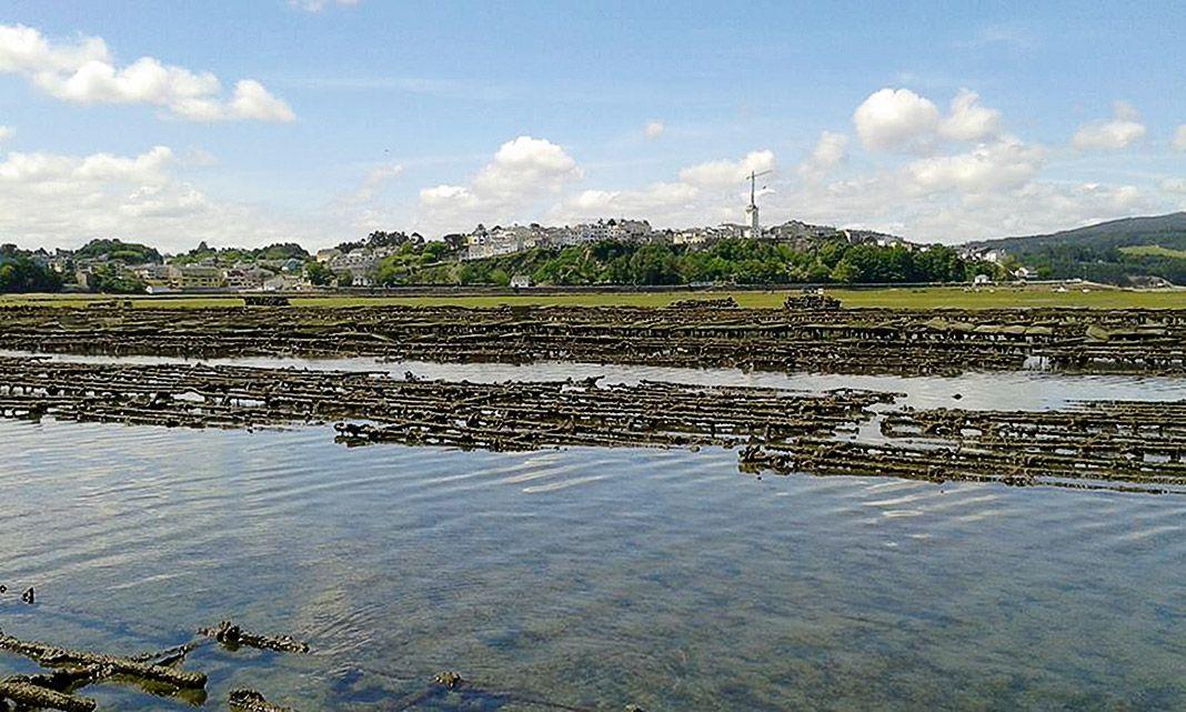Panorámica del cultivo de ostras. Ostrastur (Castropol)