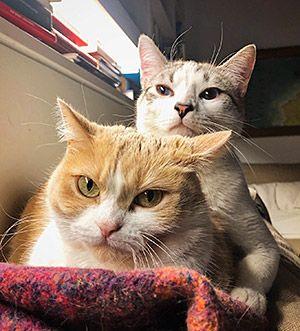 Atún y Mia, gatos de Pedro Zuazua