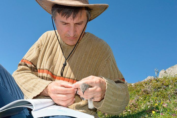 Juan Carlos Illera tomando muestras de una de las aves capturadas