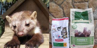 """A la izda. la garduña """"Mini"""". A la dcha., donación de piensos para distintos animales de El Bosque Zoológico"""