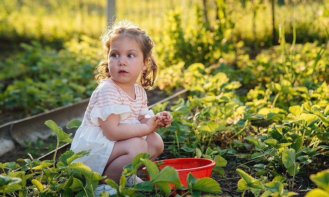 Niña en plantación de fresas
