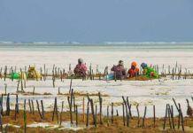 Recogedoras de algas en Zanzíbar