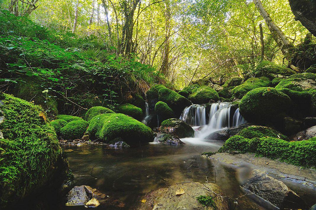 Reserva de la biosfera de Muniellos, en Cangas del Narcea