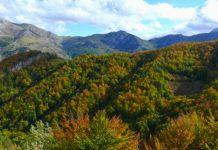Bosque en Asturias