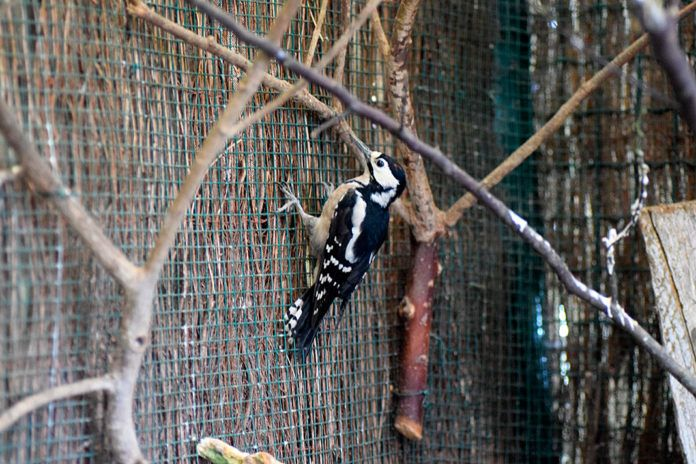 Pájaro carpintero en el Núcleo Zoológico El Bosque