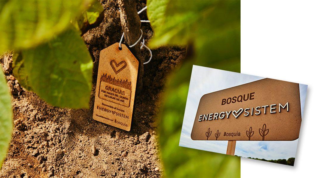 Bosquia, empresa que se dedica a crear nuevos bosques por todo el territorio nacional y en el extranjero