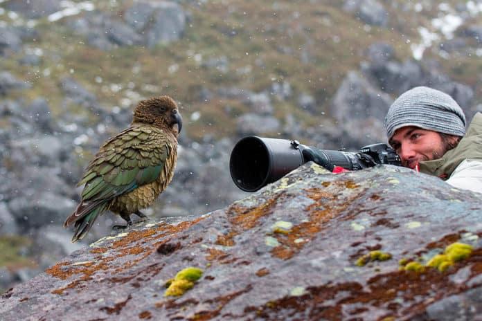 Daniel López Velasco junto a un Kea, el único loro alpino del mundo